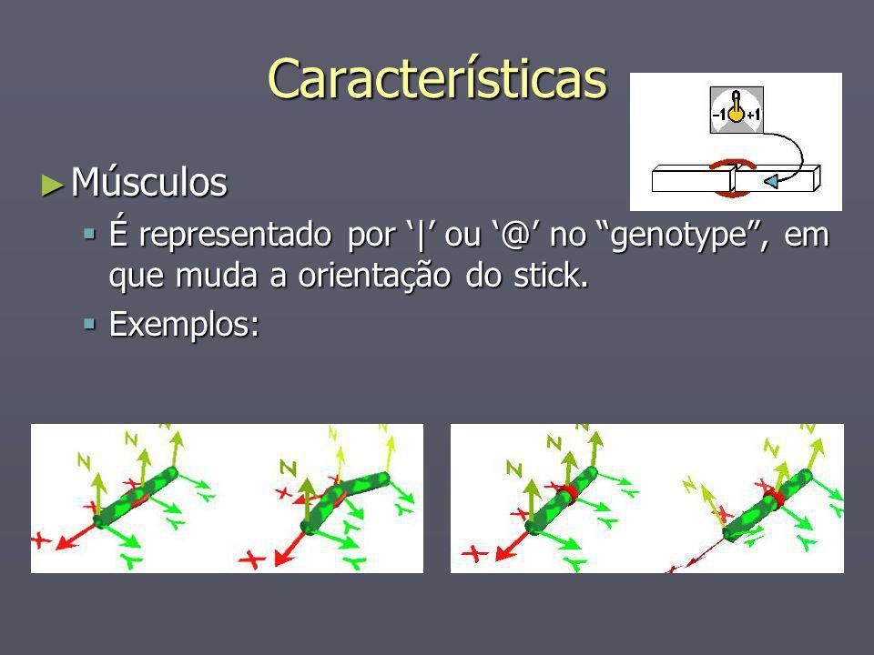Características Músculos Músculos É representado por | ou @ no genotype, em que muda a orientação do stick. É representado por | ou @ no genotype, em
