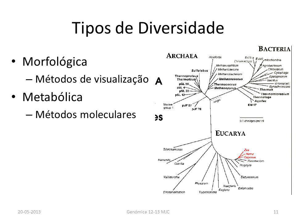 Tipos de Diversidade Morfológica – Métodos de visualização Metabólica – Métodos moleculares 20-05-2013Genómica 12-13 MJC11