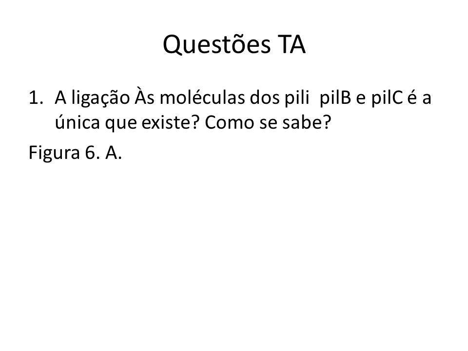 Questões TA 1.A ligação Às moléculas dos pili pilB e pilC é a única que existe.