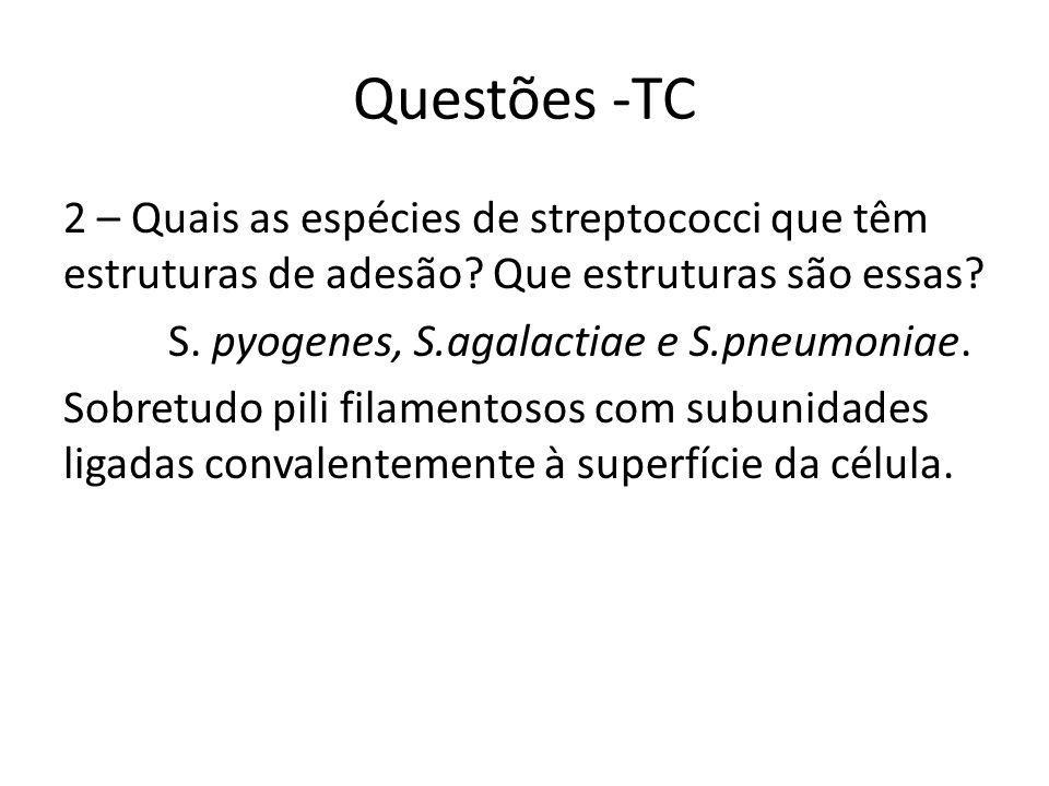 Questões -TC 2 – Quais as espécies de streptococci que têm estruturas de adesão.