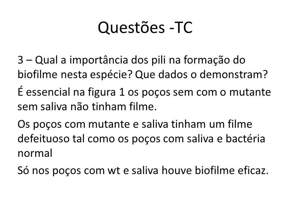 Questões -TC 3 – Qual a importância dos pili na formação do biofilme nesta espécie.