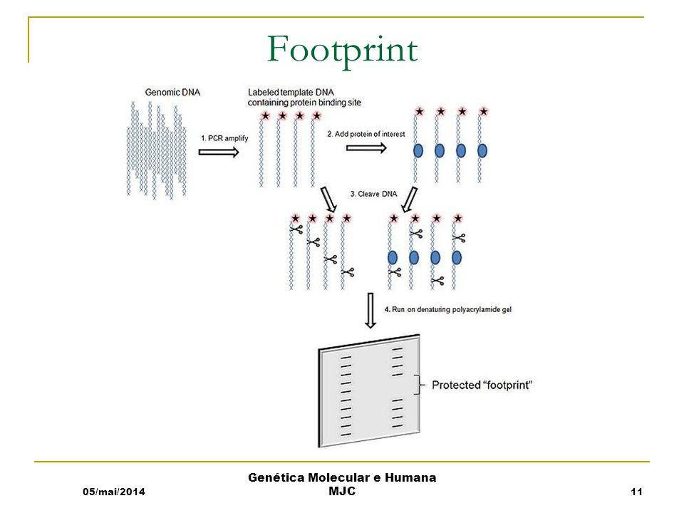 Footprint 05/mai/2014 Genética Molecular e Humana MJC 11