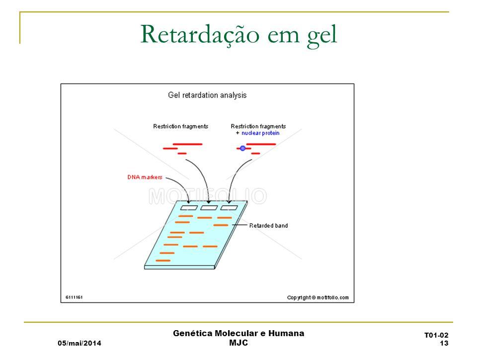 Retardação em gel 05/mai/2014 Genética Molecular e Humana MJC T01-02 13