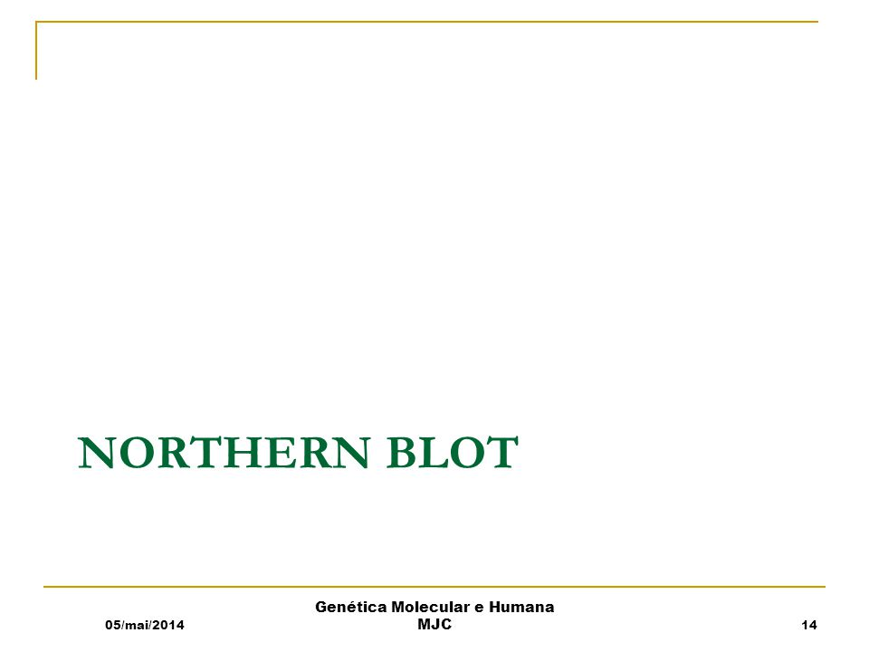 NORTHERN BLOT 05/mai/2014 Genética Molecular e Humana MJC 14