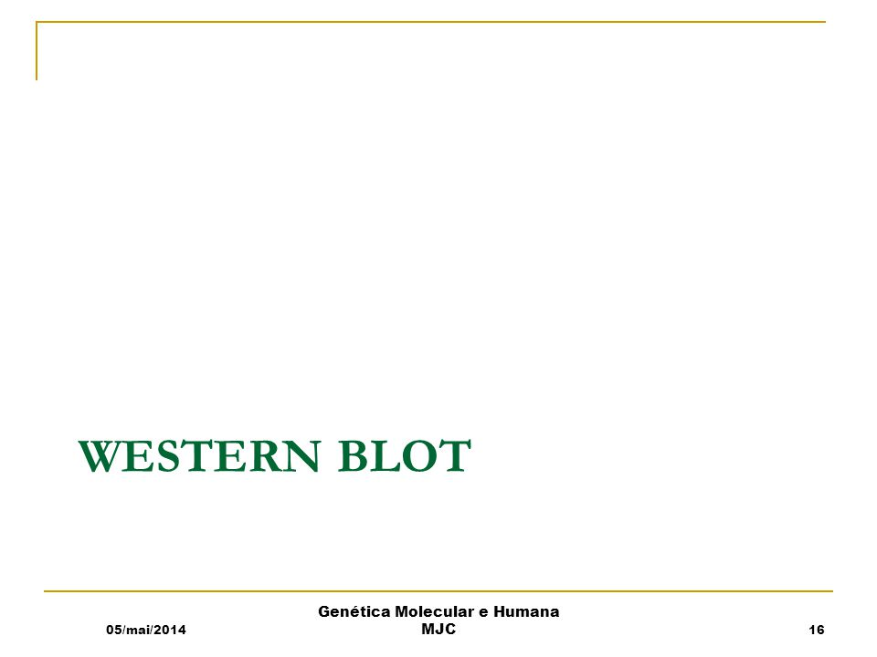 WESTERN BLOT 05/mai/2014 Genética Molecular e Humana MJC 16