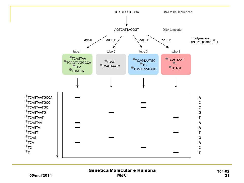 05/mai/2014 Genética Molecular e Humana MJC T01-02 21