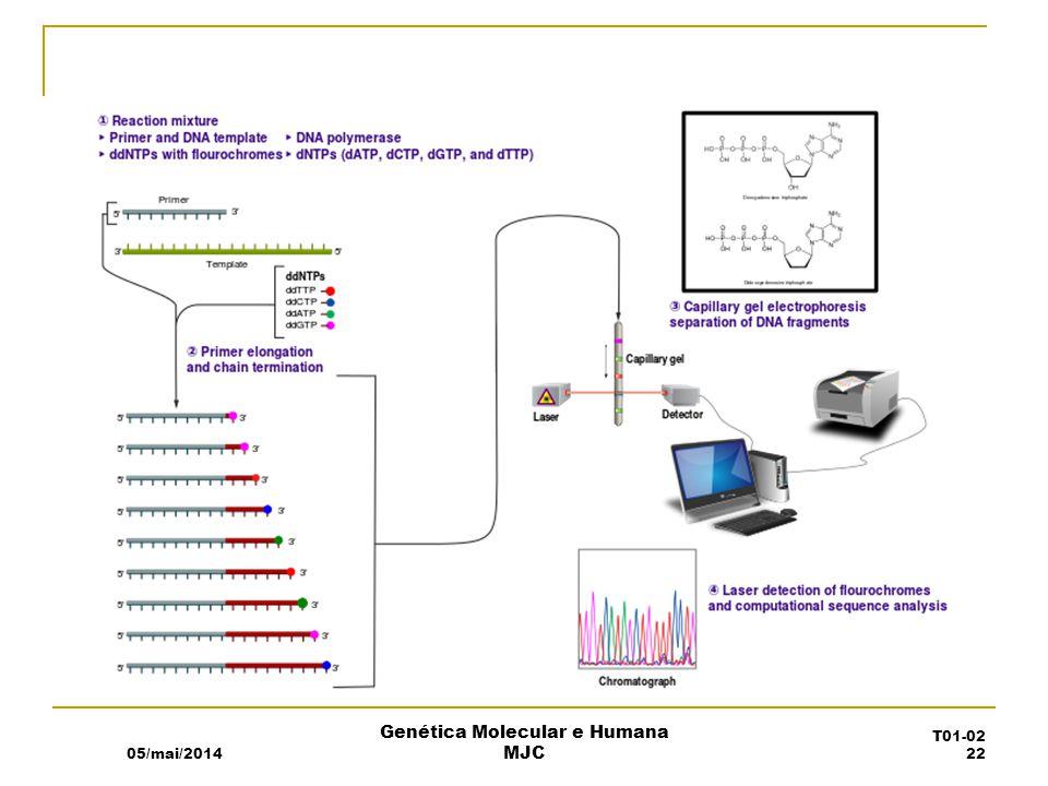 05/mai/2014 Genética Molecular e Humana MJC T01-02 22