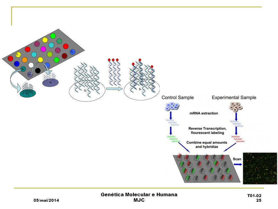05/mai/2014 Genética Molecular e Humana MJC T01-02 25