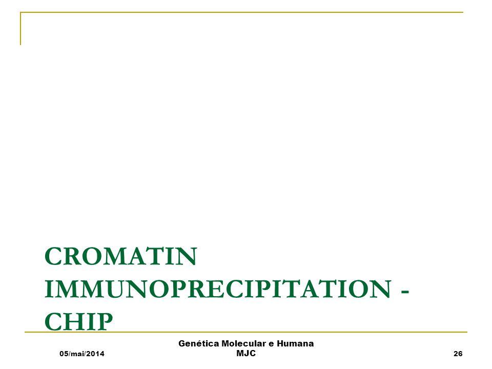 CROMATIN IMMUNOPRECIPITATION - CHIP 05/mai/2014 Genética Molecular e Humana MJC 26