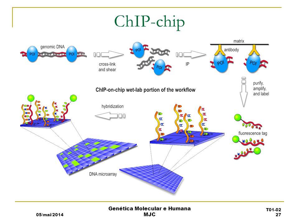 ChIP-chip 05/mai/2014 Genética Molecular e Humana MJC T01-02 27