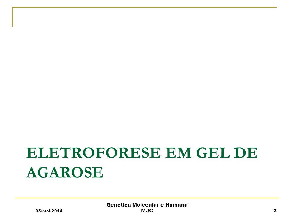 ELETROFORESE EM GEL DE AGAROSE 05/mai/2014 Genética Molecular e Humana MJC 3