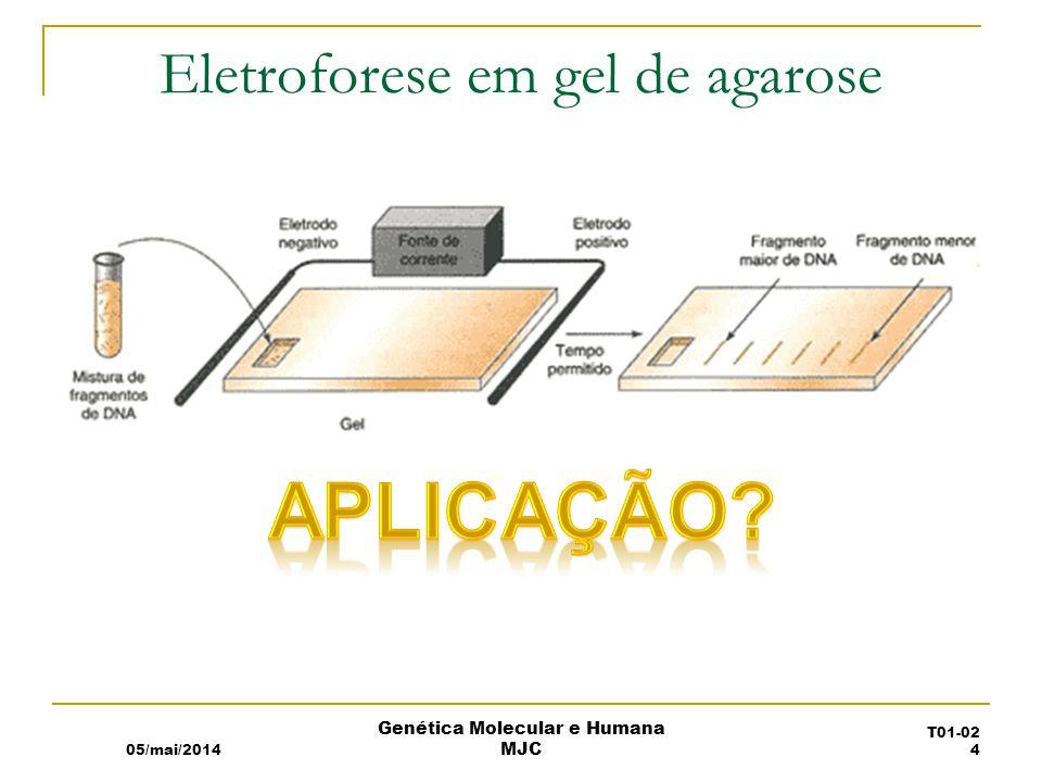 Eletroforese em gel de agarose 05/mai/2014 Genética Molecular e Humana MJC T01-02 4