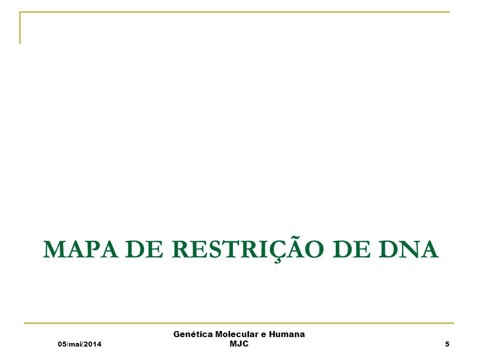 Enzimas de restrição 05/mai/2014 Genética Molecular e Humana MJC T01-02 6