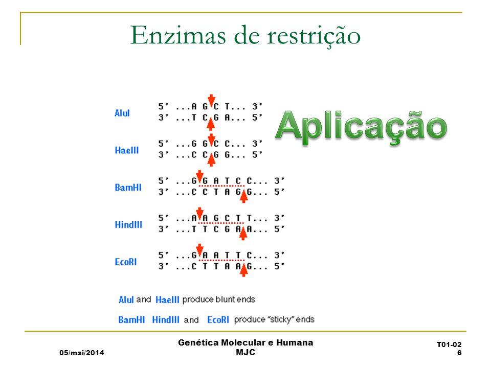 Western blot 05/mai/2014 Genética Molecular e Humana MJC T01-02 17