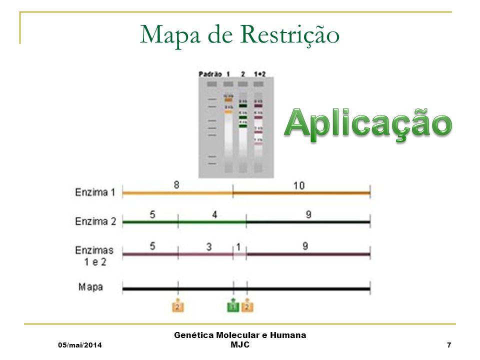 Mapa de Restrição 05/mai/2014 Genética Molecular e Humana MJC 7