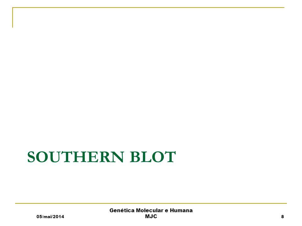 SOUTHERN BLOT 05/mai/2014 Genética Molecular e Humana MJC 8