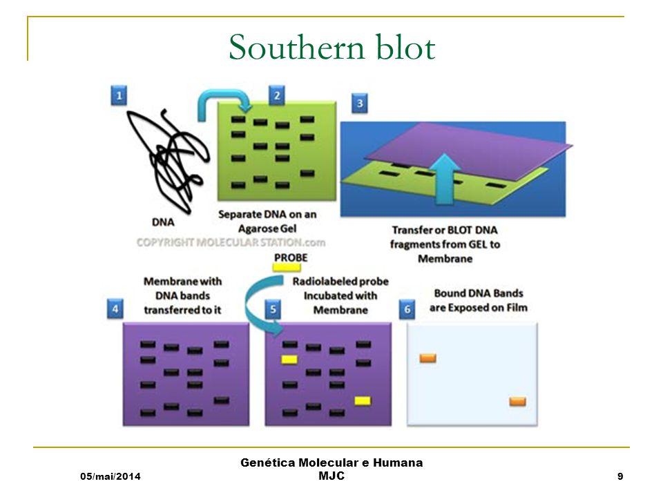 Southern blot 05/mai/2014 Genética Molecular e Humana MJC 9