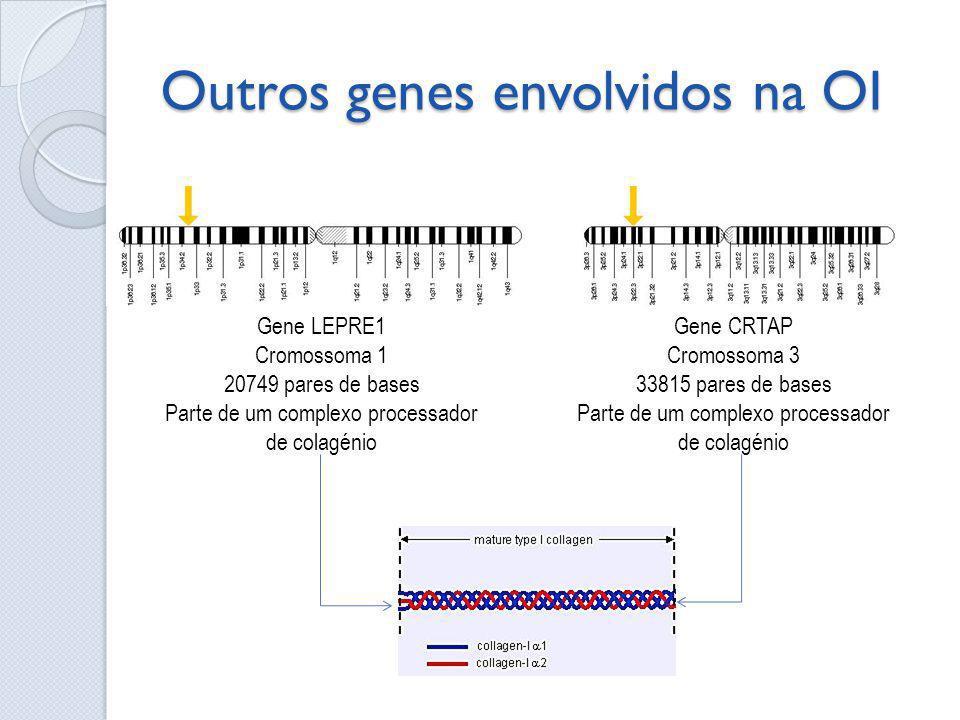 Outros genes envolvidos na OI Gene LEPRE1 Cromossoma 1 20749 pares de bases Parte de um complexo processador de colagénio Gene CRTAP Cromossoma 3 3381