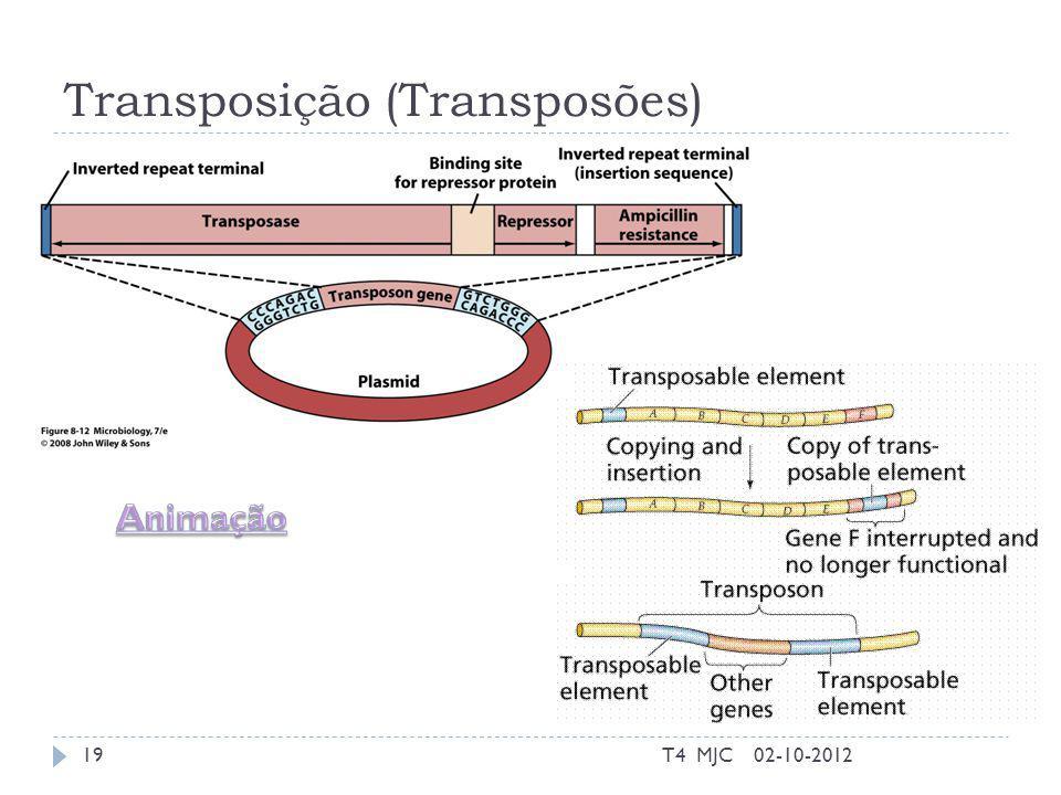 Transposição (Transposões) 02-10-2012T4 MJC19