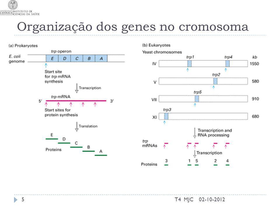 Organização dos genes no cromosoma 02-10-2012T4 MJC5