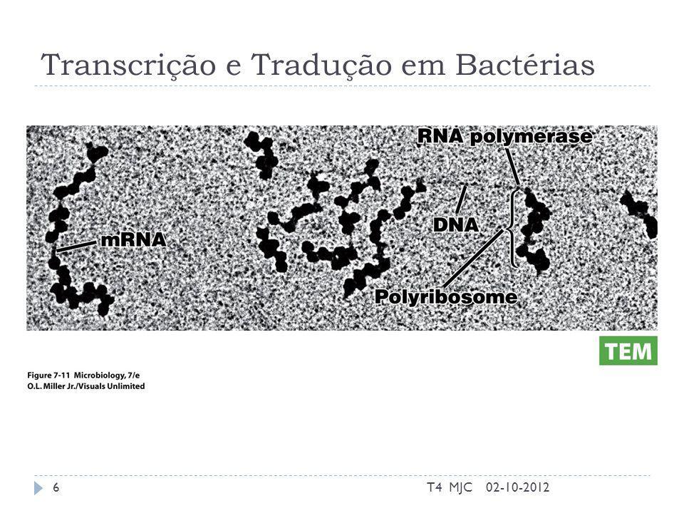 Conjugação Plasmídeo F 02-10-2012T4 MJC17 http://highered.mcgraw- hill.com/sites/0072556781/student_view0/chapt er13/animation_quiz_3.html