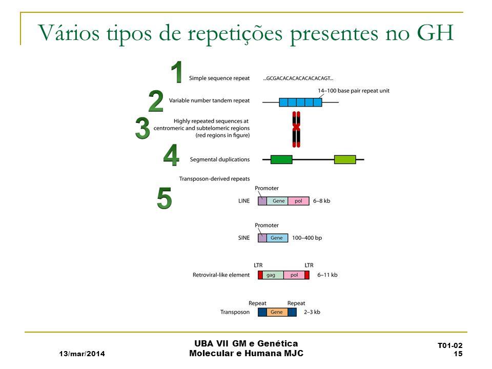 Vários tipos de repetições presentes no GH 13/mar/2014 UBA VII GM e Genética Molecular e Humana MJC T01-02 15