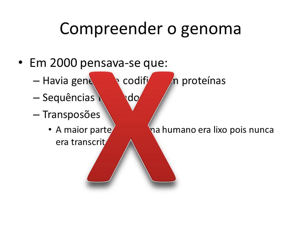 Compreender o genoma Em 2000 pensava-se que: – Havia genes que codificavam proteínas – Sequências reguladoras – Transposões A maior parte do genoma humano era lixo pois nunca era transcrito.
