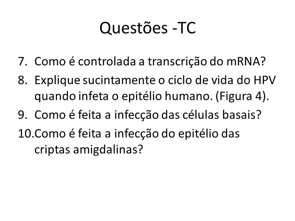 Questões -TC 7.Como é controlada a transcrição do mRNA? 8.Explique sucintamente o ciclo de vida do HPV quando infeta o epitélio humano. (Figura 4). 9.