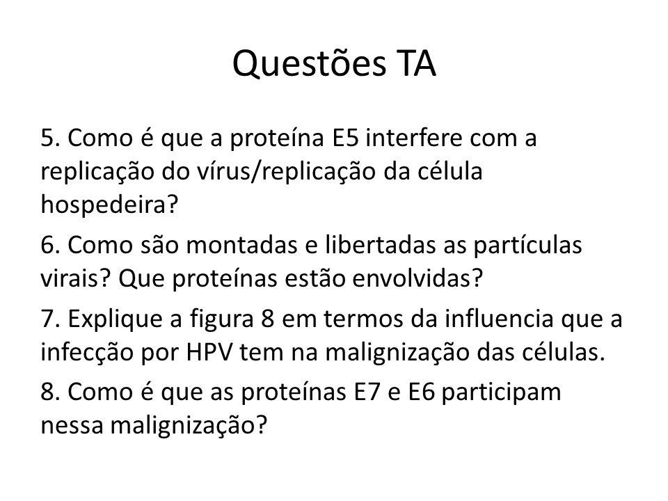 Questões TA 5. Como é que a proteína E5 interfere com a replicação do vírus/replicação da célula hospedeira? 6. Como são montadas e libertadas as part