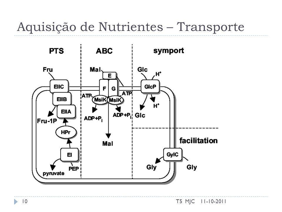 Aquisição de Nutrientes – Transporte 11-10-2011T5 MJC10