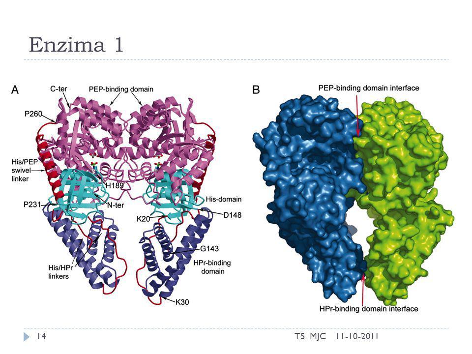 Enzima 1 11-10-2011T5 MJC14