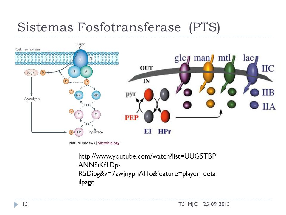 Sistemas Fosfotransferase (PTS) 25-09-2013T5 MJC15 http://www.youtube.com/watch?list=UUG5TBP ANNSiKf1Dp- R5Dibg&v=7zwjnyphAHo&feature=player_deta ilpa