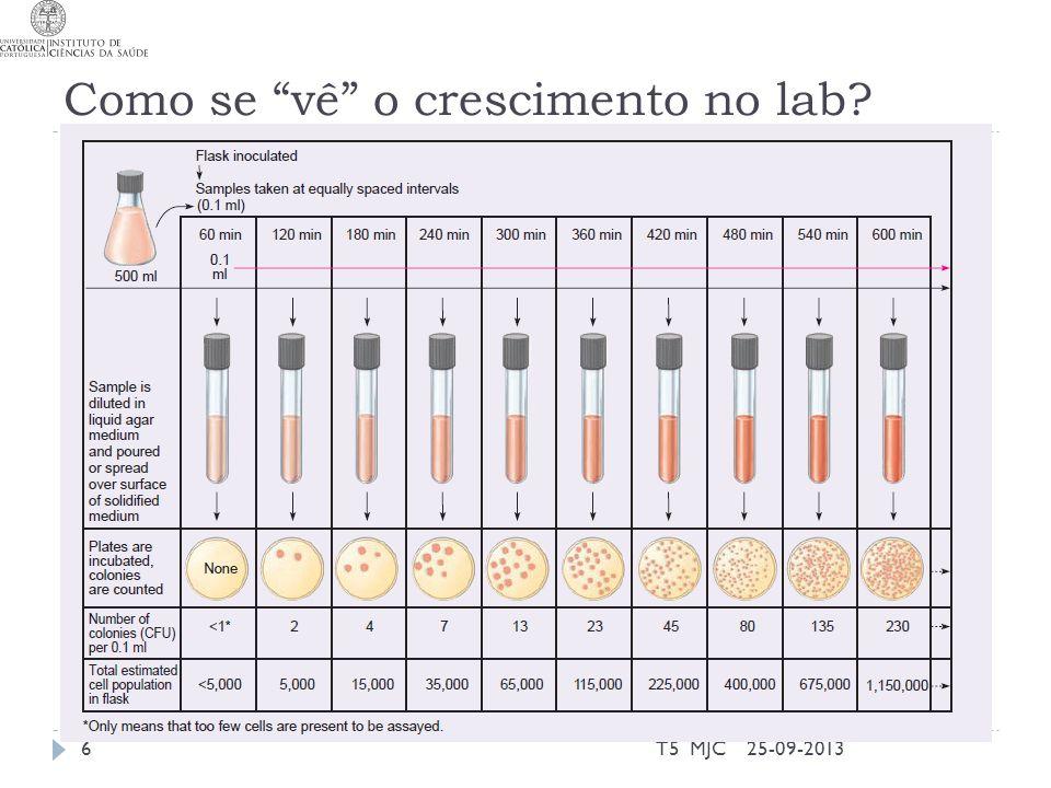 Como se vê o crescimento no lab 25-09-2013T5 MJC6