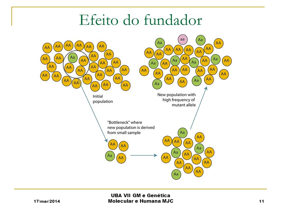 Efeito do fundador 17/mar/2014 UBA VII GM e Genética Molecular e Humana MJC 11