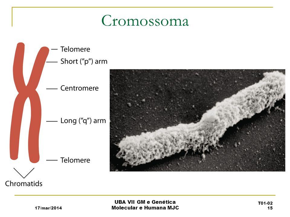 Cromossoma 17/mar/2014 UBA VII GM e Genética Molecular e Humana MJC T01-02 15