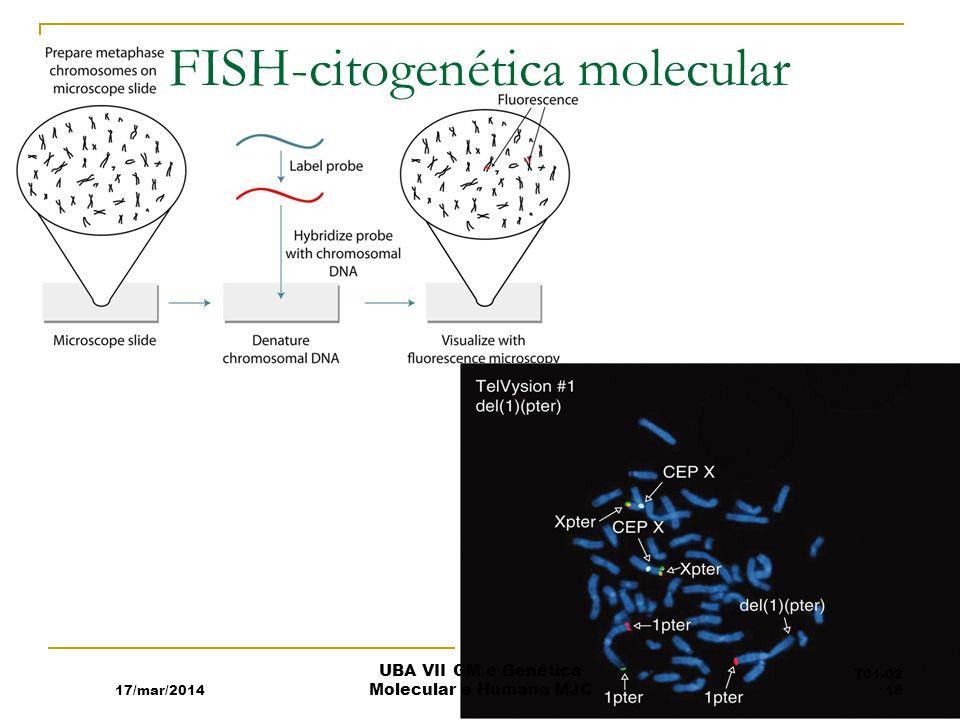 FISH-citogenética molecular 17/mar/2014 UBA VII GM e Genética Molecular e Humana MJC T01-02 18