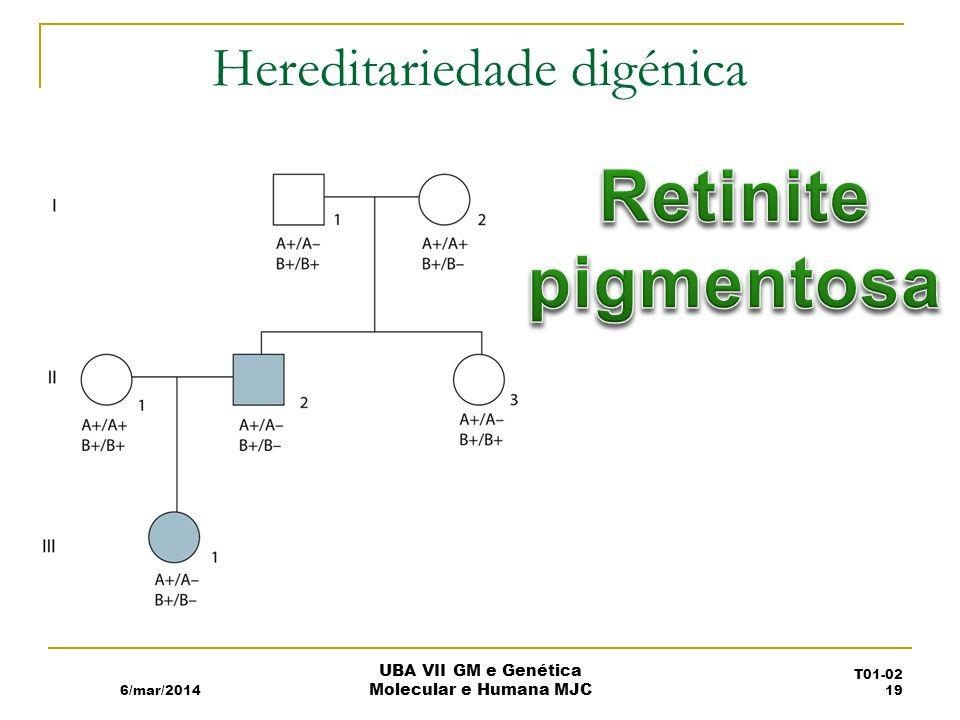 Hereditariedade digénica 6/mar/2014 UBA VII GM e Genética Molecular e Humana MJC T01-02 19