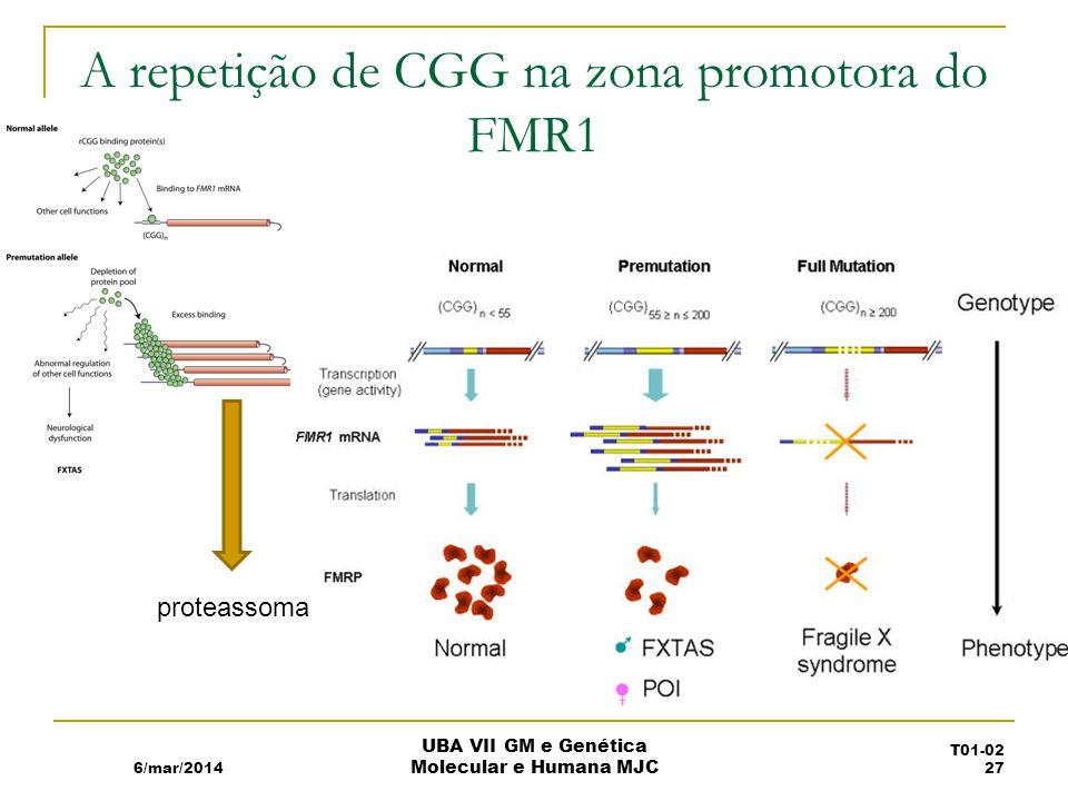 A repetição de CGG na zona promotora do FMR1 6/mar/2014 UBA VII GM e Genética Molecular e Humana MJC proteassoma T01-02 27