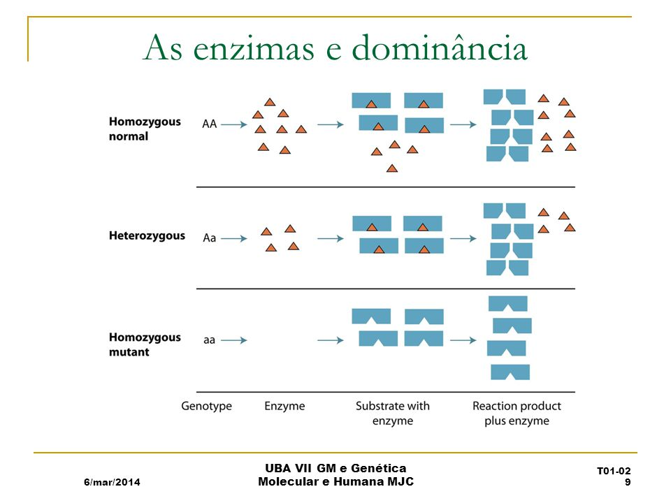 As enzimas e dominância 6/mar/2014 UBA VII GM e Genética Molecular e Humana MJC T01-02 9