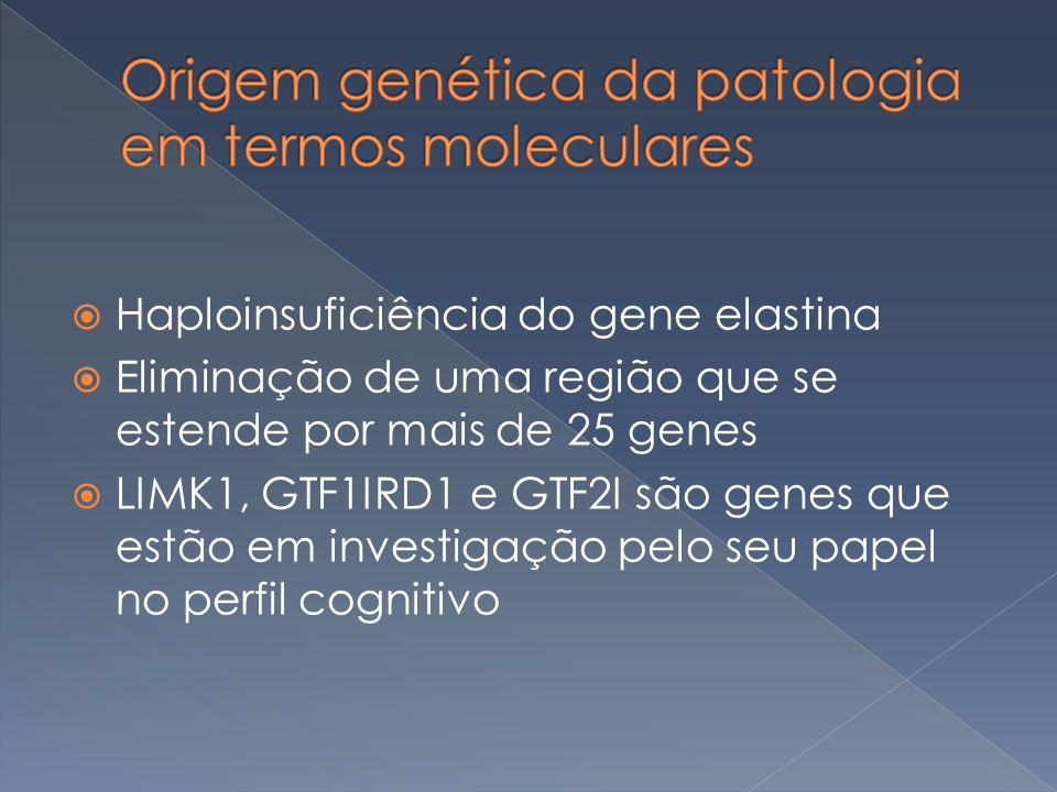 Haploinsuficiência do gene elastina Eliminação de uma região que se estende por mais de 25 genes LIMK1, GTF1IRD1 e GTF2I são genes que estão em invest