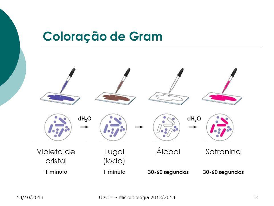 14/10/2013UPC II - Microbiologia 2013/20143 Coloração de Gram Violeta de cristal 1 minuto Lugol (iodo) 1 minuto Álcool 30-60 segundos Safranina 30-60
