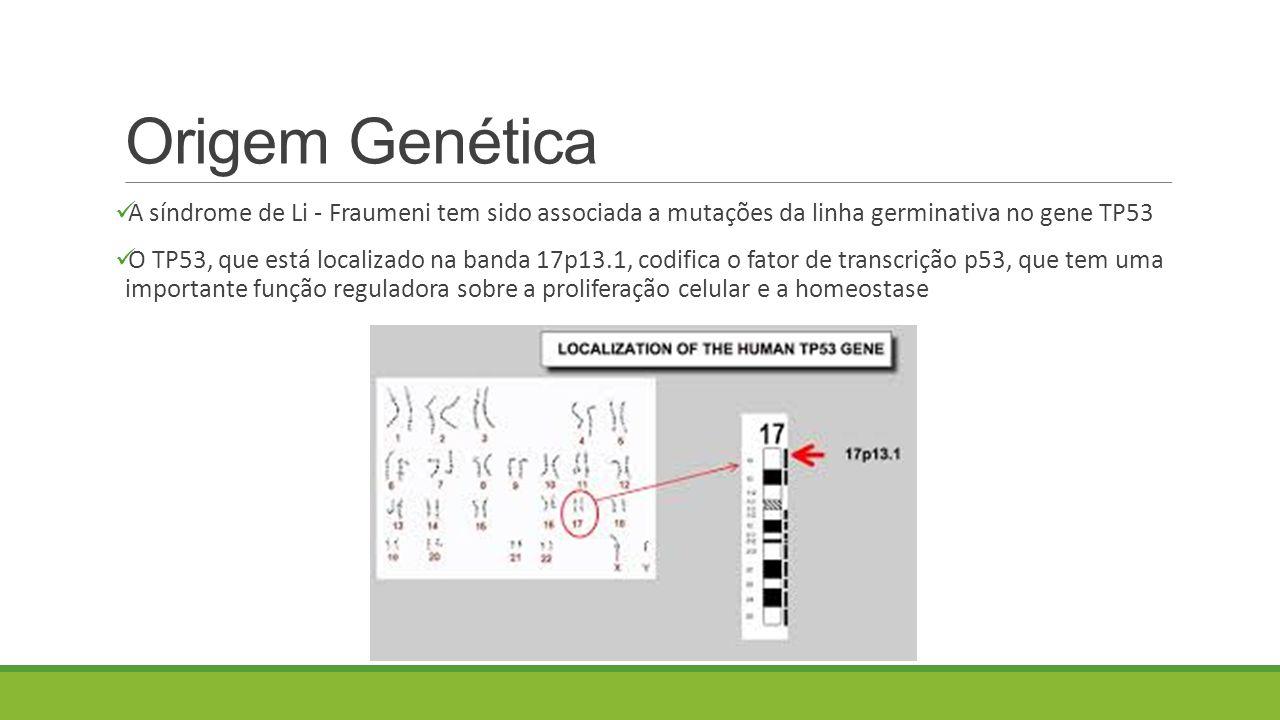 Origem Genética A síndrome de Li - Fraumeni tem sido associada a mutações da linha germinativa no gene TP53 O TP53, que está localizado na banda 17p13