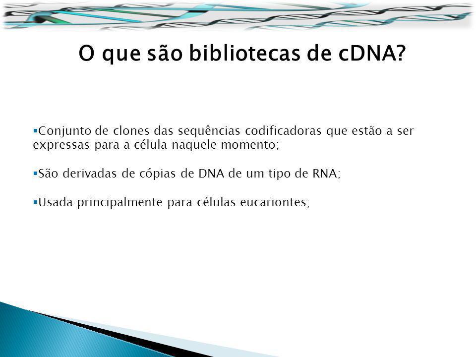 O que são bibliotecas de cDNA? Conjunto de clones das sequências codificadoras que estão a ser expressas para a célula naquele momento; São derivadas