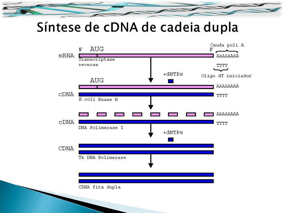 Síntese de cDNA de cadeia dupla
