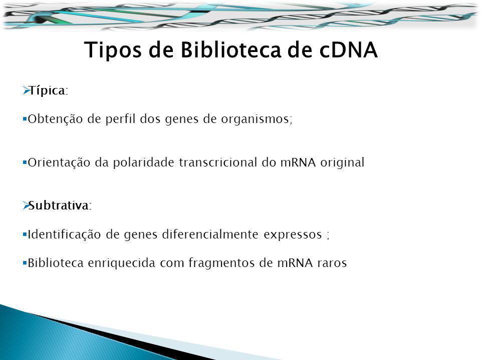 Tipos de Biblioteca de cDNA Típica: Obtenção de perfil dos genes de organismos; Orientação da polaridade transcricional do mRNA original Subtrativa: I