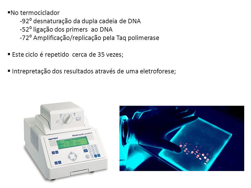 No termociclador -92 º desnaturação da dupla cadeia de DNA -52 º ligação dos primers ao DNA -72 º Amplificação/replicação pela Taq polimerase Este ciclo é repetido cerca de 35 vezes; Intrepretação dos resultados através de uma eletroforese;