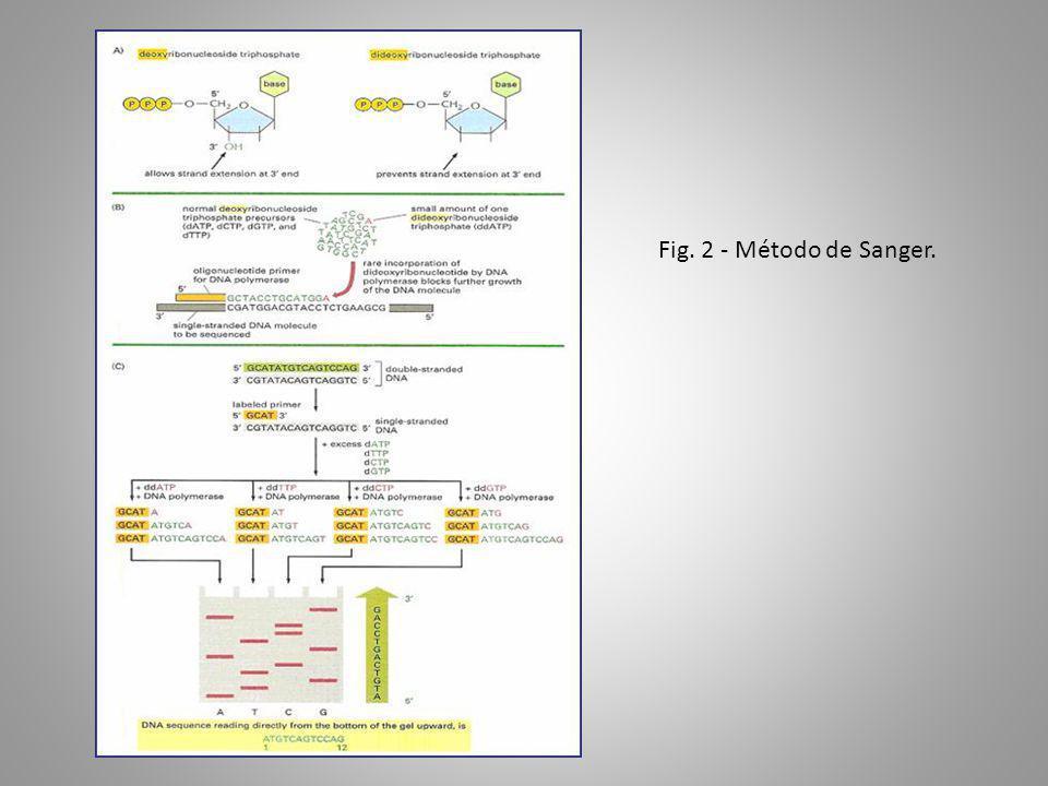 Fig. 2 - Método de Sanger.