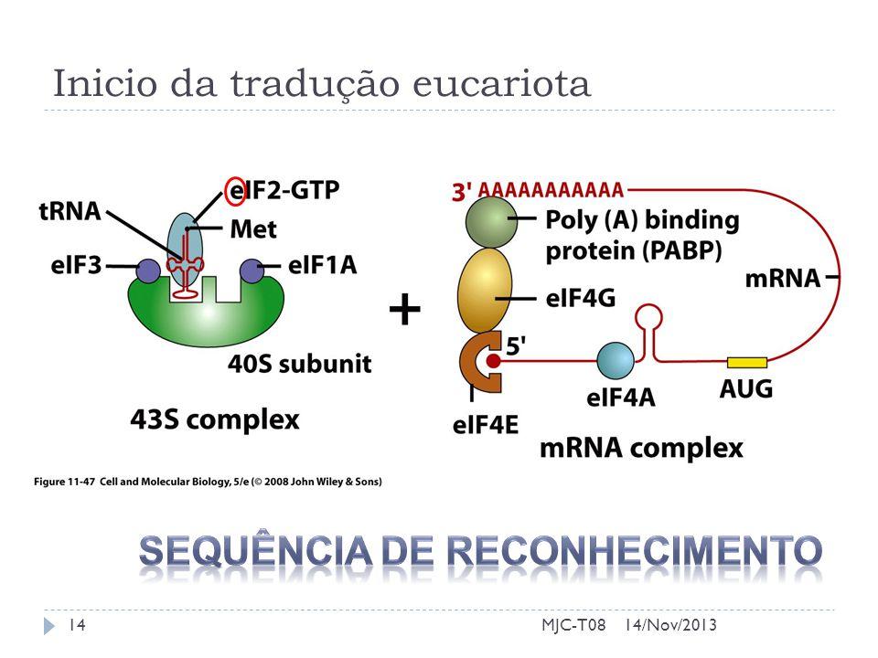Inicio da tradução eucariota 14/Nov/201314MJC-T08
