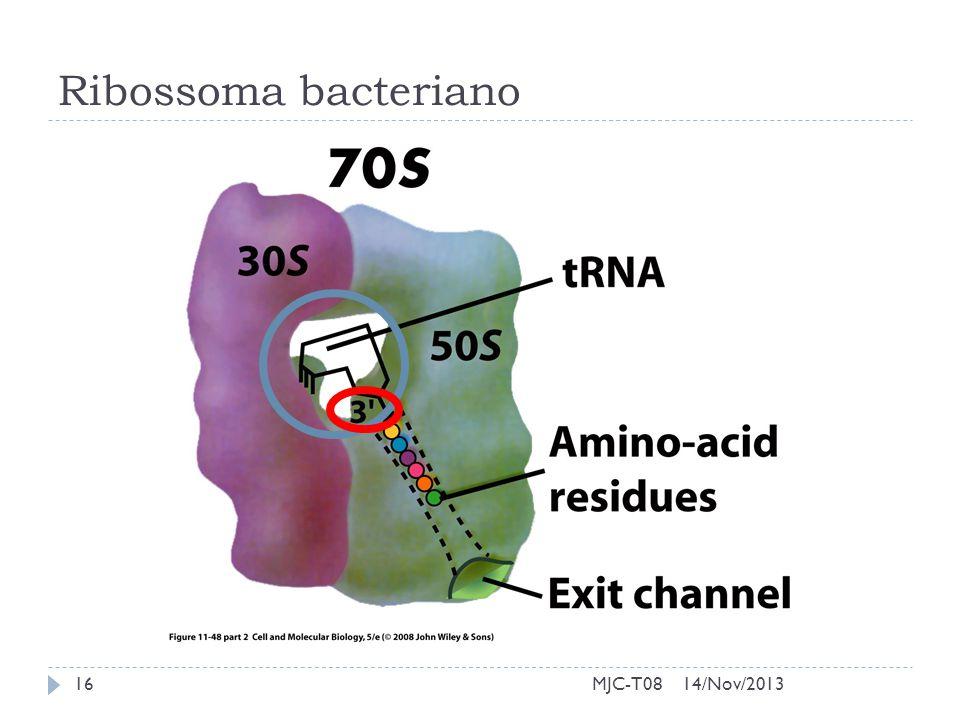 Ribossoma bacteriano 14/Nov/201316MJC-T08