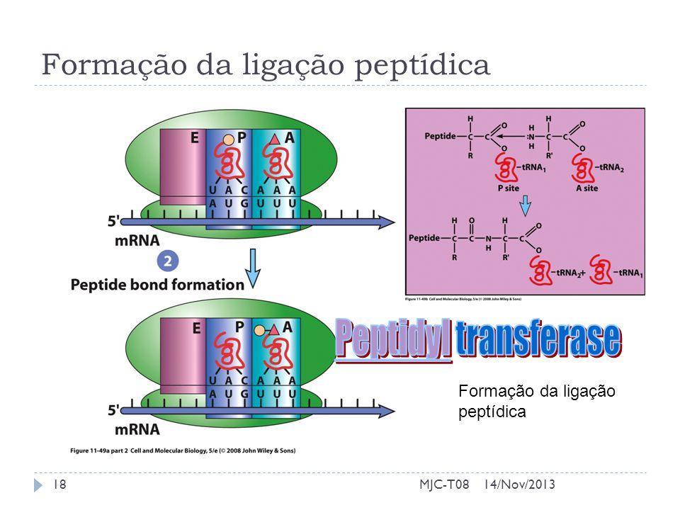 Formação da ligação peptídica 14/Nov/201318MJC-T08
